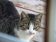 Outdoor cat - looking healthy