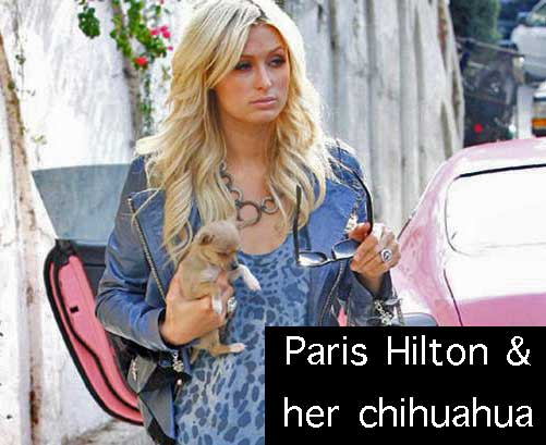 Paris Hilton Chihuahua