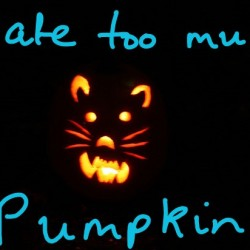 Pumpkin for cat constipation and diarrhea