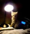 gabs lamp