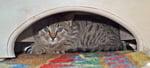 my-feral-cat