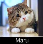 Maruthumb