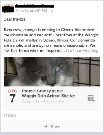abuse at cat shelter