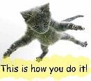 cat falling thumb