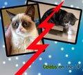 celebrity-cats