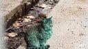 green cat thumb