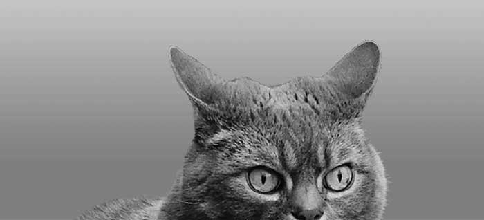 nat geo cat
