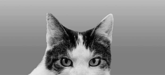 Cat Ear Positions - Ears Up