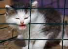 kitten-in-cage-thumb