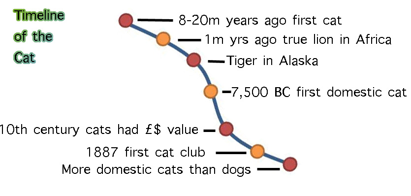 Timeline of the cat