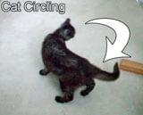 cat-circling-thumb