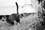 cat-spraying-thumbnail