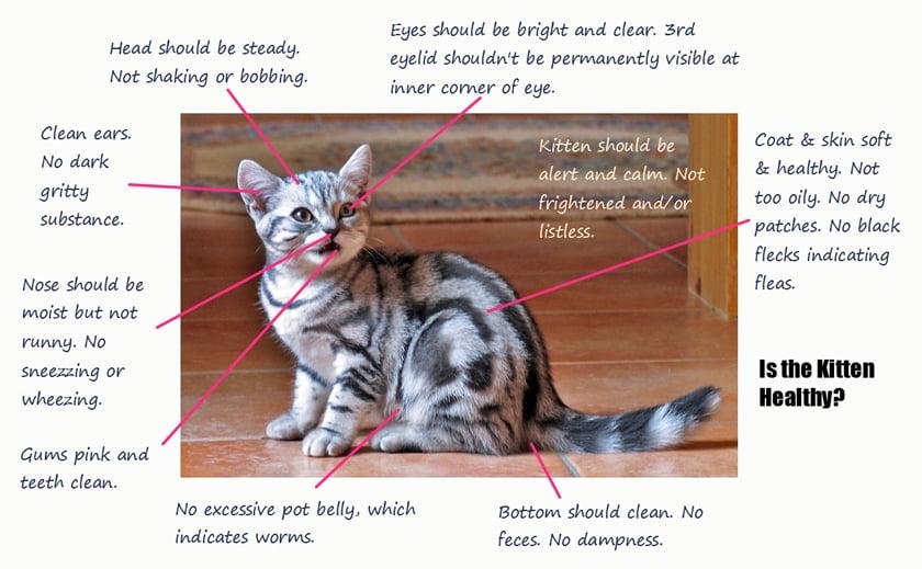 Is the kitten healthy?