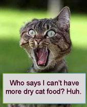 Cat addicted to dry cat food