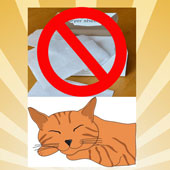 Dryer sheets are toxic to cats