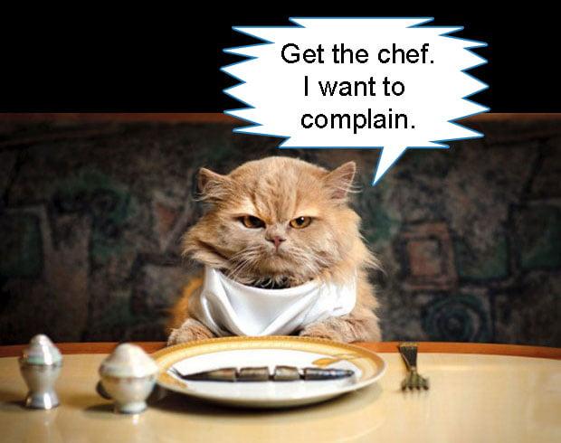 Cat Picky Eating