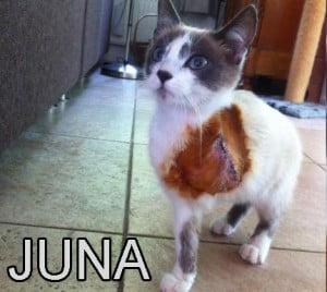 best flea and tick repellent for cats