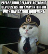 Cat navigation skills