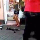 Cat oblivious to danger