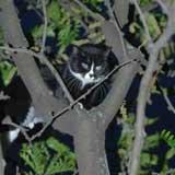 Cat stuck up a tree
