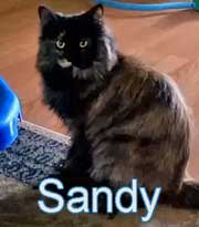Sandy died at groomers