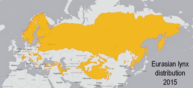 Eurasian lynx distribution