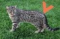 Sensitive spot at base of tail