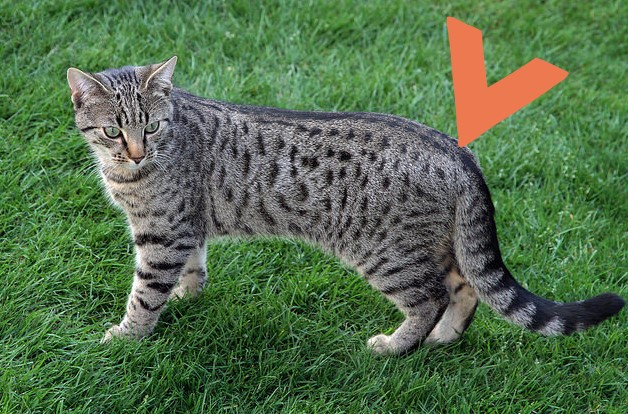 Cats Petting Spots