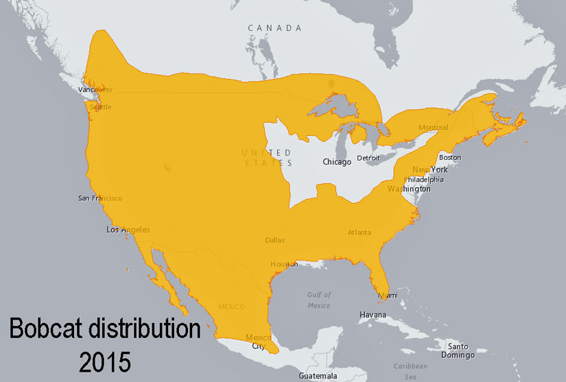 Bobcat distribution