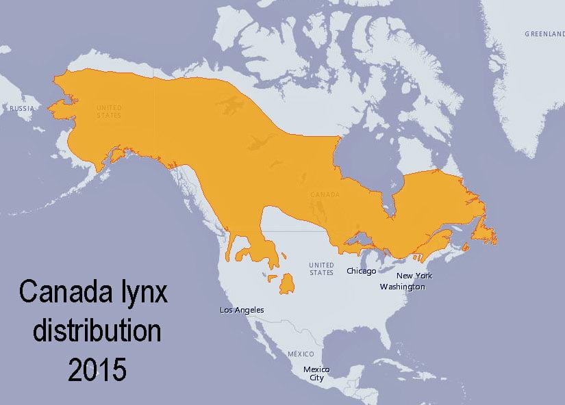 Canada lynx distribution