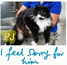 PJ a cat given up to a shelter