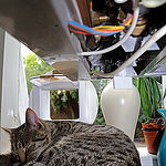cat flap dangers to security
