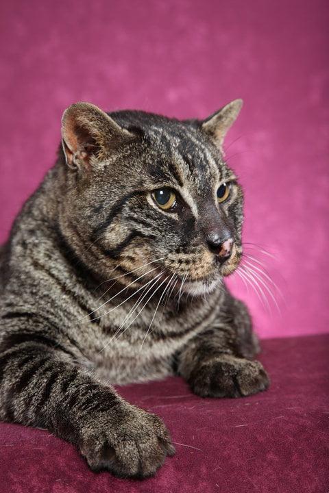 Bagral cat