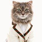 Cat Model
