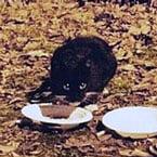 Rescued cat Auckland