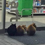 Cats sitting politely outside Japanese convenience stores