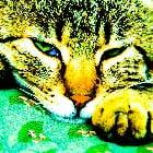 Feline pain control