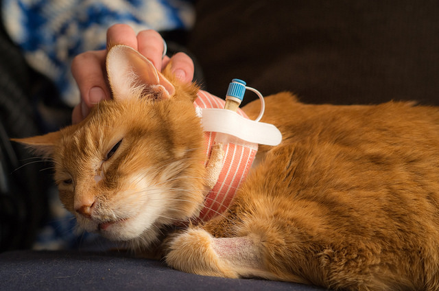 Feeding Tubes In Dogs And Cats