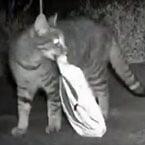 Kleptomaniac cat