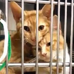 Loving cats best buddies in cage in shelter