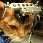 Animal testing on a cat