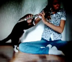 "Cat ""attacks"" flute player"
