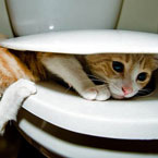 Cat messing around on toilet