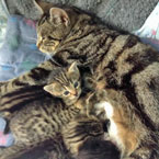 Mom and kittens reunited