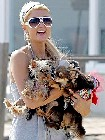 Paris Hilton and toy dogs s