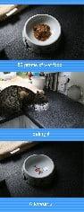 50 grams cat food