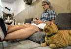 Cat music composer David Teie and cats