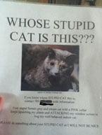 Nuisance Cat