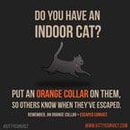 Orange collar for cat convicts
