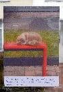 Bus stop cat